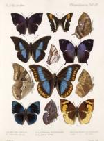 چرخه زندگی پروانه ها و انواع آن ها