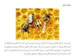 زندگی زنبور عسل  فرمت ورد تعداد4صفحه